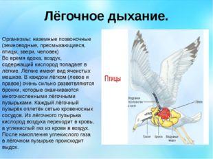 Лёгочное дыхание. Организмы: наземные позвоночные (земноводные, пресмыкающиес