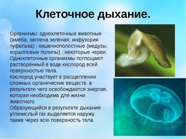 Клеточное дыхание. Организмы: одноклеточные животные (амёба, эвглена зелёная,...
