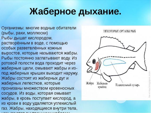 Жаберное дыхание. Организмы: многие водные обитатели (рыбы, раки, моллюски) Р...