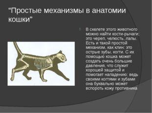 """""""Простые механизмы в анатомии кошки"""" В скелете этого животного можно найти ко"""