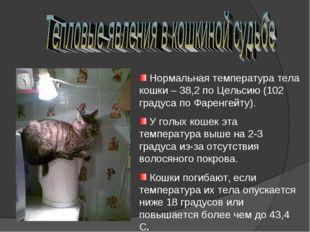 Нормальная температура тела кошки – 38,2 по Цельсию (102 градуса по Фаренгей