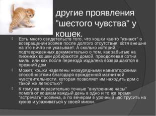 """другие проявления """"шестого чувства"""" у кошек. Есть много свидетельств того, чт"""