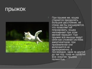прыжок При прыжке же, кошка старается преодолеть большое расстояние, её спина