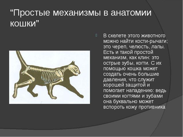 """""""Простые механизмы в анатомии кошки"""" В скелете этого животного можно найти ко..."""