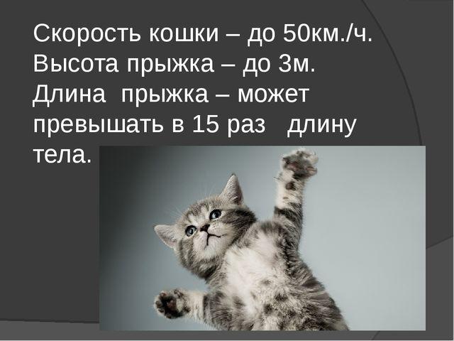 Скорость кошки – до 50км./ч. Высота прыжка – до 3м. Длина прыжка – может прев...