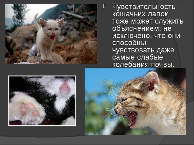 Чувствительность кошачьих лапок тоже может служить объяснением: не исключено,...