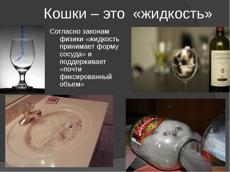 Кошки – это «жидкость» Согласно законам физики «жидкость принимает форму сосу...