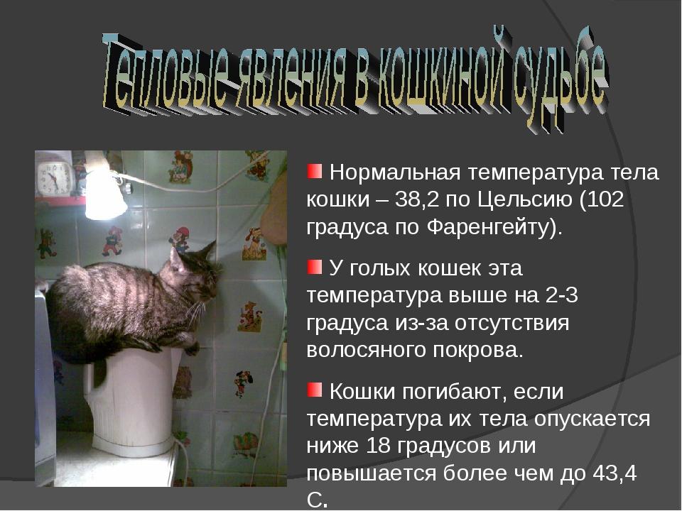Нормальная температура тела кошки – 38,2 по Цельсию (102 градуса по Фаренгей...