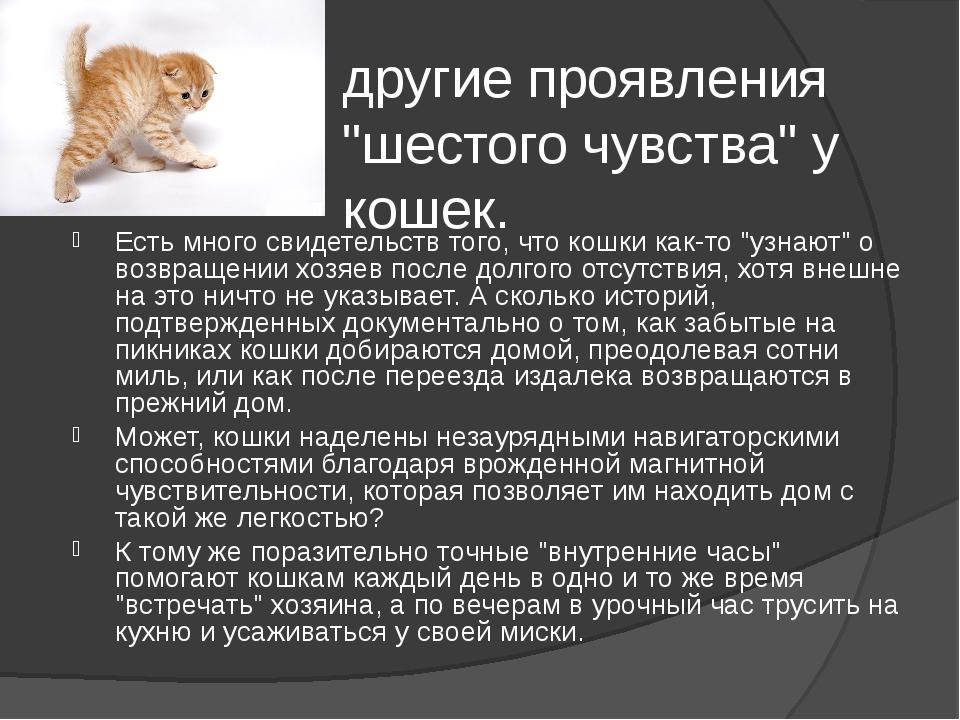 """другие проявления """"шестого чувства"""" у кошек. Есть много свидетельств того, чт..."""