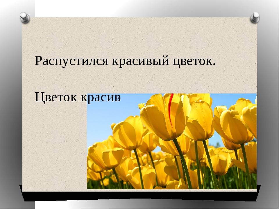 Распустился красивый цветок. Цветок красив