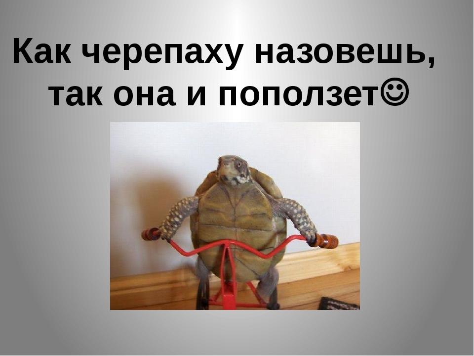 Как черепаху назовешь, так она и поползет