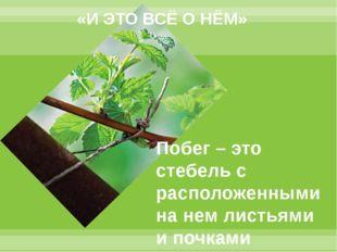 «И ЭТО ВСЁ О НЁМ» Побег – это стебель с расположенными на нем листьями и почк
