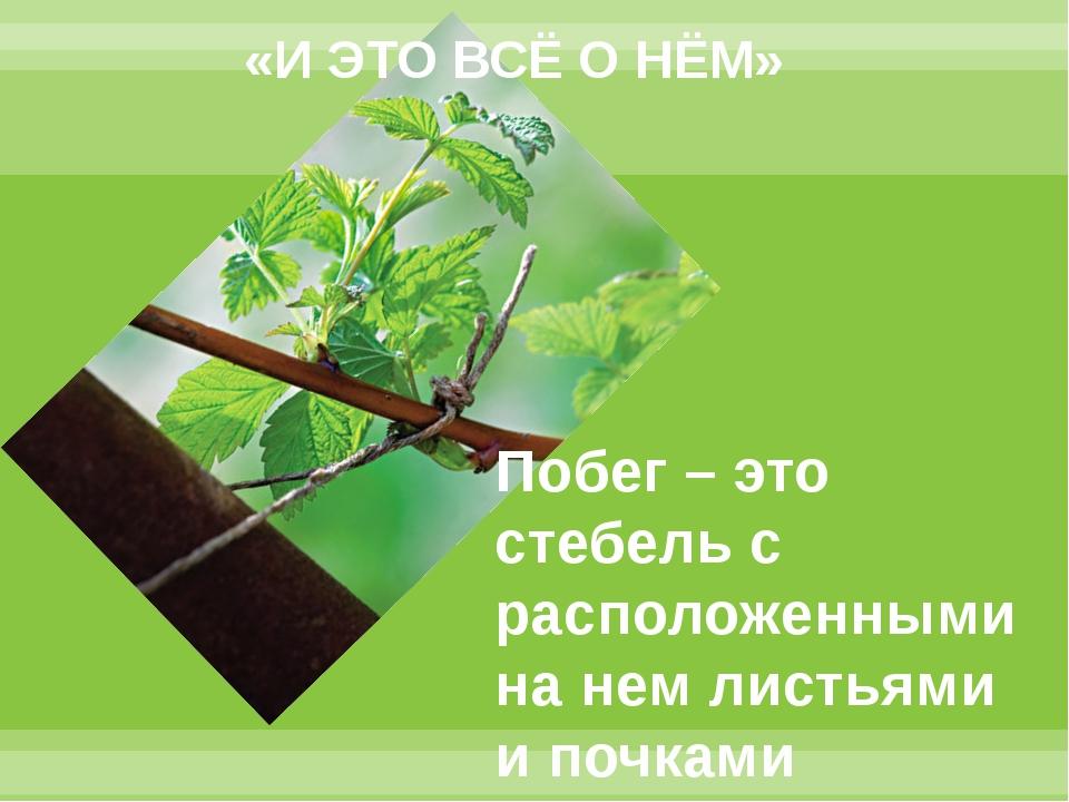 «И ЭТО ВСЁ О НЁМ» Побег – это стебель с расположенными на нем листьями и почк...