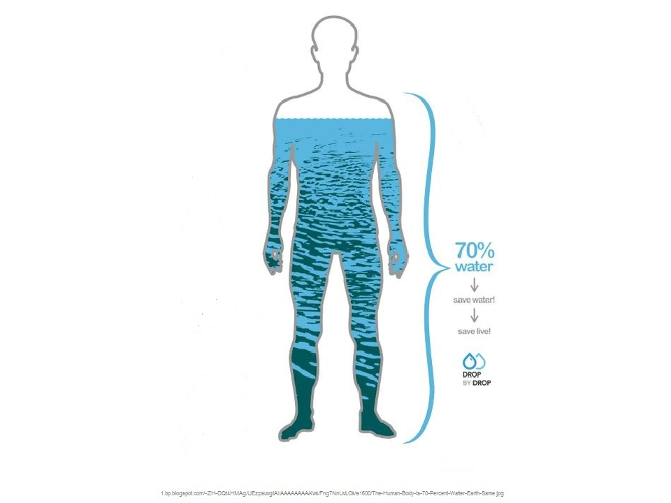 the human body and water The human body is composed of elements including hydrogen, oxygen, carbon, calcium and phosphorus these elements reside in trillions of cells and non-cellular components of the body the adult male body is about 60% water for a total water content of some 42 litres.