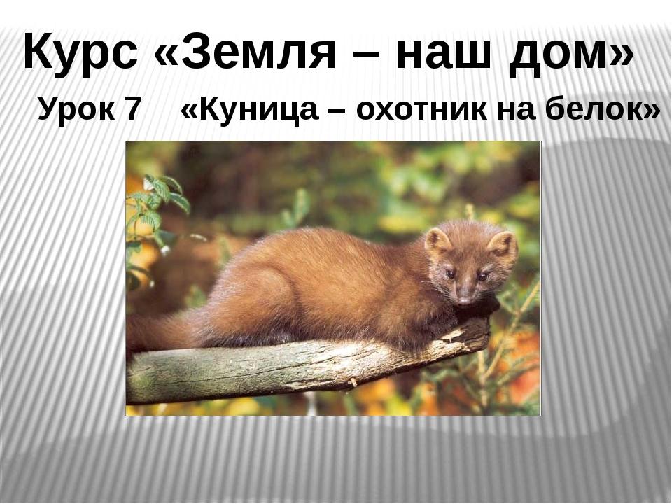 Курс «Земля – наш дом» Урок 7 «Куница – охотник на белок»