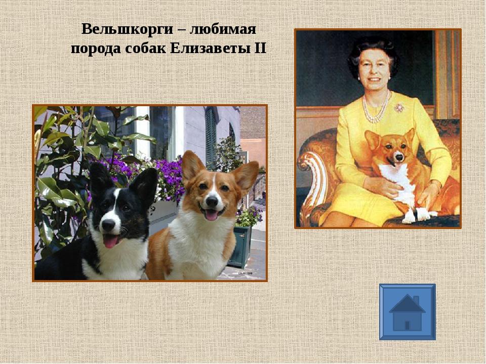 Вельшкорги – любимая порода собак Елизаветы II