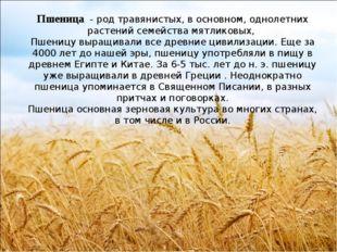 Пшеница - род травянистых, в основном, однолетних растений семейства мятлико