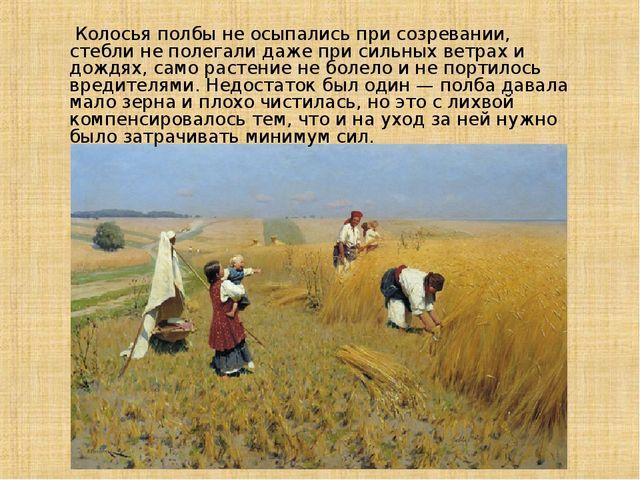 Колосья полбы не осыпались при созревании, стебли не полегали даже при сильн...