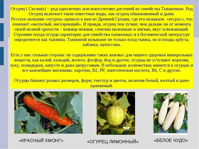 Огурец ( Cucumis) – род однолетних или многолетних растений из семейства Тыкв...
