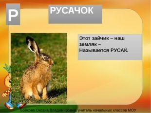 РУСАЧОК Этот зайчик – наш земляк – Называется РУСАК. Бойкова Оксана Владимиро