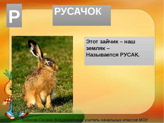 РУСАЧОК Этот зайчик – наш земляк – Называется РУСАК. Бойкова Оксана Владимиро...