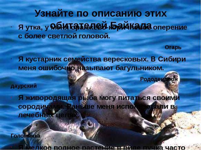 Узнайте по описанию этих обитателей Байкала Я утка, у меня оранжево-коричнево...