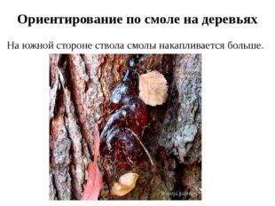 Ориентирование по смоле на деревьях На южной стороне ствола смолы накапливает