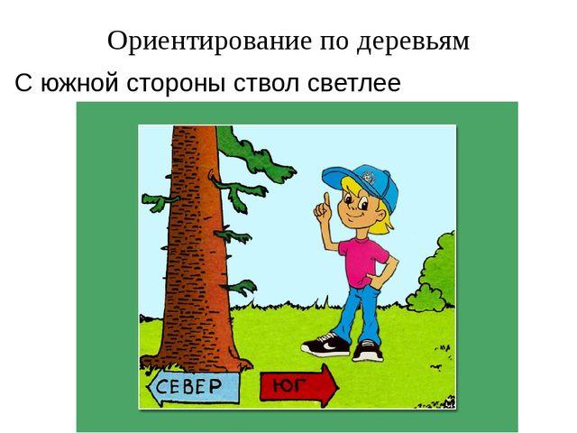 Ориентирование по деревьям С южной стороны ствол светлее