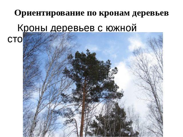 Ориентирование по кронам деревьев Кроны деревьев с южной стороны гуще