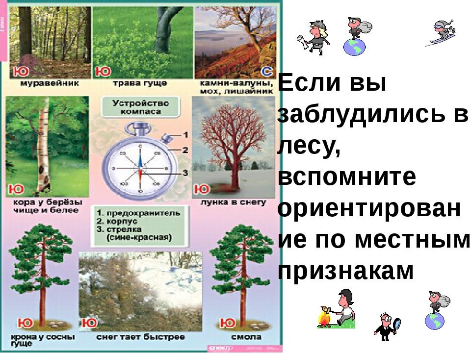 Если вы заблудились в лесу, вспомните ориентирование по местным признакам