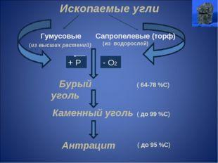 Ископаемые угли Гумусовые Сапропелевые (торф) (из высших растений) (из водоро