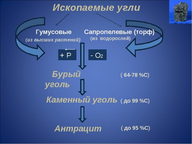 Ископаемые угли Гумусовые Сапропелевые (торф) (из высших растений) (из водоро...