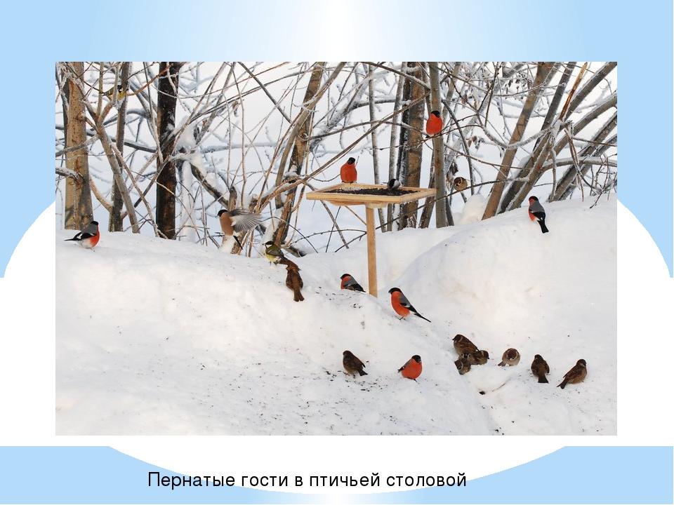 Пернатые гости в птичьей столовой
