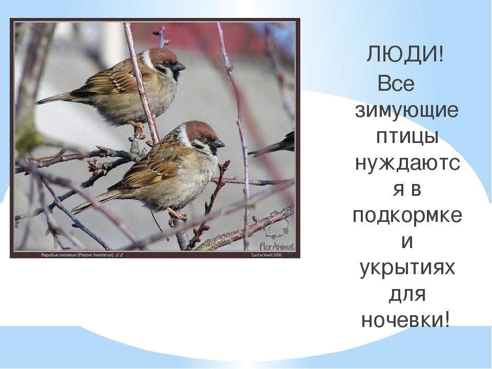 ЛЮДИ! Все зимующие птицы нуждаются в подкормке и укрытиях для ночевки!