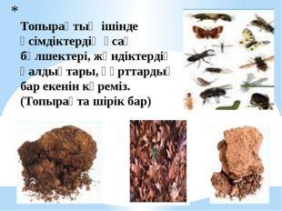 Топырақтың ішінде өсімдіктердің ұсақ бөлшектері, жәндіктердің қалдықтары, құ