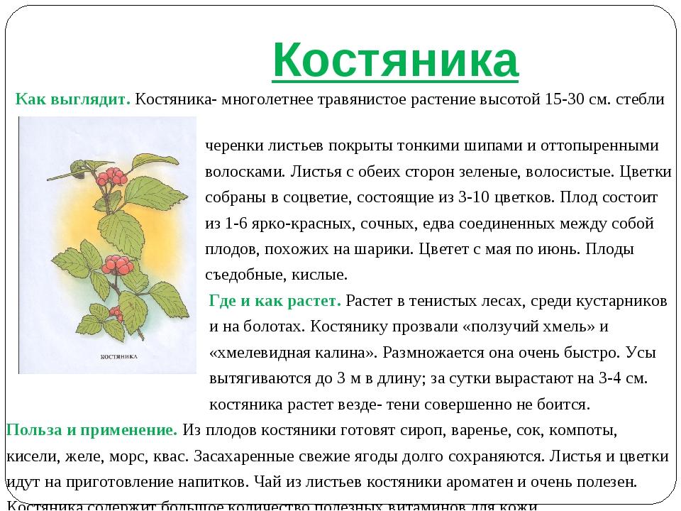 Костяника Как выглядит. Костяника- многолетнее травянистое растение высотой...