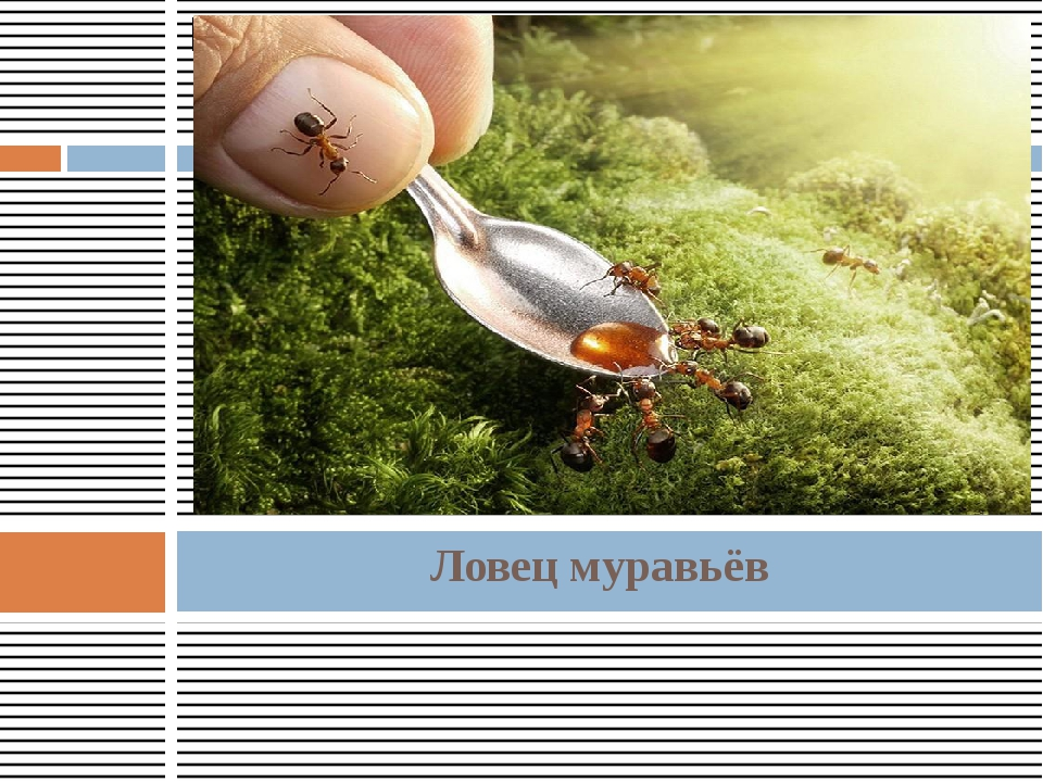 Ловец муравьёв