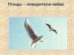 Птицы – покорители небес
