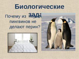Биологические задачи Почему из перьев пингвинов не делают перин?