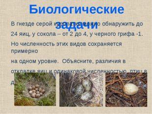 Биологические задачи В гнезде серой куропатке можно обнаружить до 24 яиц, у с