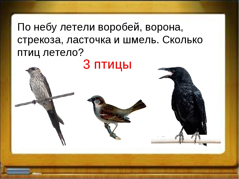 По небу летели воробей, ворона, стрекоза, ласточка и шмель. Сколько птиц лете...