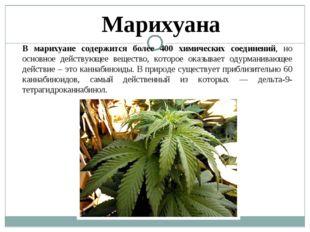 Марихуана В марихуане содержится более 400 химических соединений, но основное