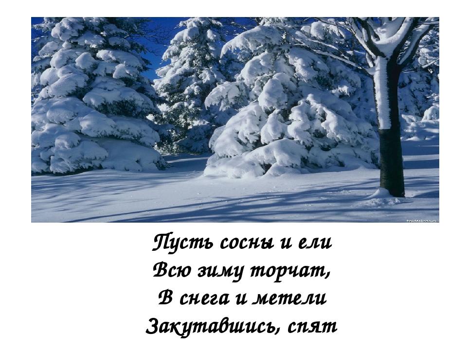 Пусть сосны и ели Всю зиму торчат, В снега и метели Закутавшись, спят