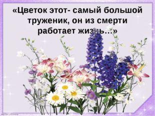 «Цветок этот- самый большой труженик, он из смерти работает жизнь…» http://li