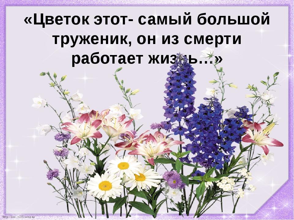 «Цветок этот- самый большой труженик, он из смерти работает жизнь…» http://li...