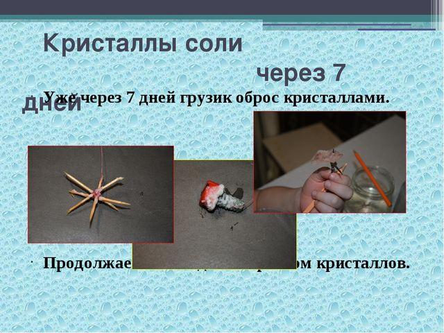 Кристаллы соли через 7 дней Уже через 7 дней грузик оброс кристаллами. Продо...