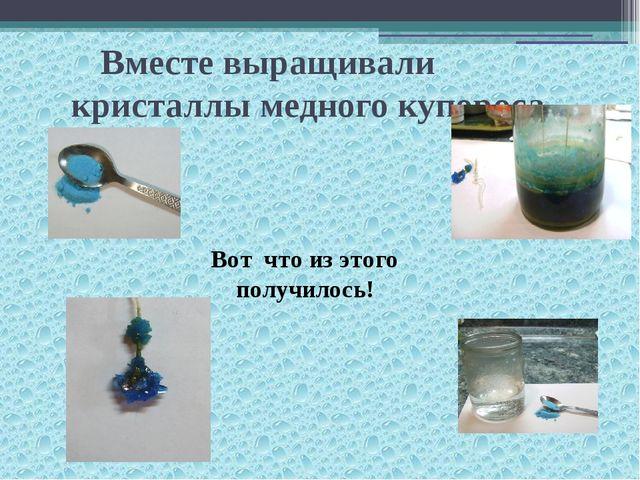Вместе выращивали кристаллы медного купороса Вот что из этого получилось!