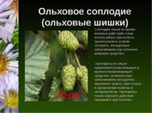 Ольховое соплодие (ольховые шишки) Соплодия ольхи во время военных действий с