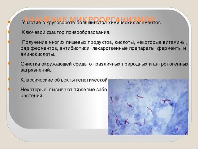 ЗНАЧЕНИЕ МИКРООРГАНИЗМОВ Участие в круговороте большинства химических элемен...