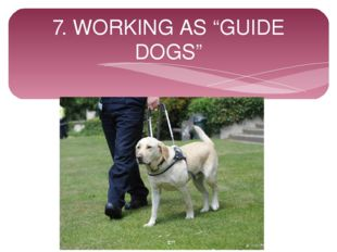 "7. WORKING AS ""GUIDE DOGS"""